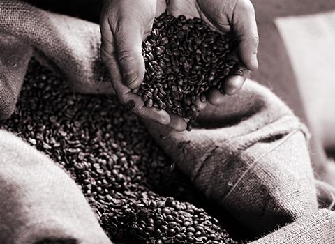 bean_choice_26